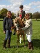 Image 3 in AUTUMN HORSE SHOW  TRINITY PARK. 12 SEPT. 2015