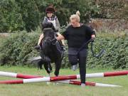 Image 4 in BECCLES AND BUNGAY RIDING CLUB. 19 AUGUST 2018
