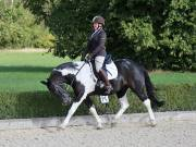 Image 5 in OPTIMUM EVENT MANAGEMENT. DRESSAGE. EASTON PARK STUD. 25TH AUGUST 2018