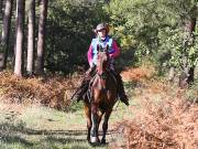 Image 67 in ANGLIAN DISTANCE RIDERS. BRANDON. 28TH OCTOBER 2018.