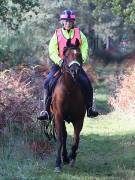 Image 74 in ANGLIAN DISTANCE RIDERS. BRANDON. 28TH OCTOBER 2018.