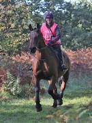 Image 90 in ANGLIAN DISTANCE RIDERS. BRANDON. 28TH OCTOBER 2018.