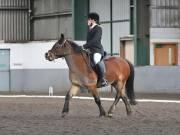 Image 2 in NEWTON HALL EQUITATION. DRESSAGE. 2ND DECEMBER 2018.