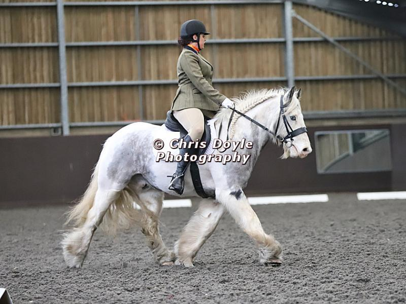 DRESSAGE AT WORLD HORSE WELFARE. 2ND. MARCH 2019