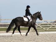 Image 2 in BROADLAND EQUESTRIAN CENTRE. DRESSAGE. 13 APRIL 2019