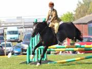 Image 268 in IPSWICH HORSE SOCIETY SPRING SHOW. 22  APRIL 2019