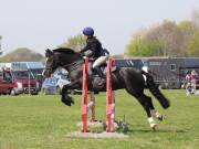 Image 269 in IPSWICH HORSE SOCIETY SPRING SHOW. 22  APRIL 2019