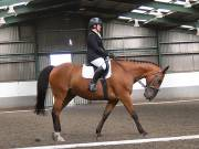 Image 21 in DRESSAGE AT NEWTON HALL EQUITATION. 1 SEPT. 2019