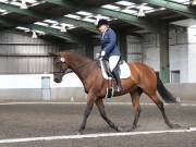 Image 26 in DRESSAGE AT NEWTON HALL EQUITATION. 1 SEPT. 2019