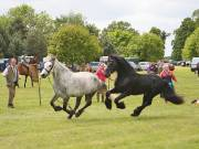 Image 16 in BERGH APTON HORSE SHOW.
