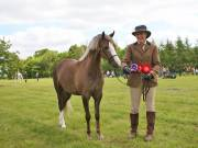 Image 17 in BERGH APTON HORSE SHOW.