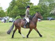 Image 19 in BERGH APTON HORSE SHOW.