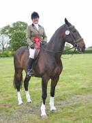 Image 2 in BERGH APTON HORSE SHOW.