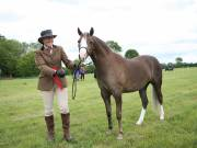 Image 4 in BERGH APTON HORSE SHOW.