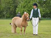 Image 11 in BERGH  APTON  HORSE  SHOW.  PART  TWO.