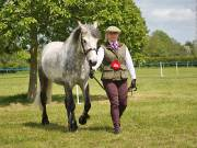 Image 25 in BERGH  APTON  HORSE  SHOW.  PART  TWO.