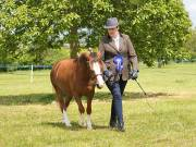Image 27 in BERGH  APTON  HORSE  SHOW.  PART  TWO.