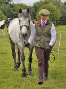 Image 6 in BERGH  APTON  HORSE  SHOW.  PART  TWO.