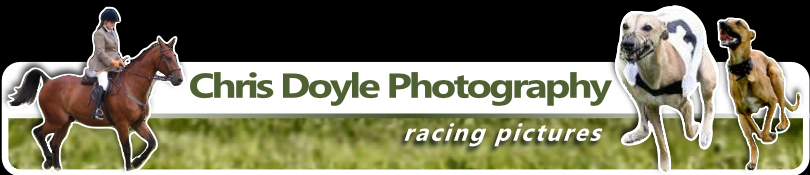 Lampy Pics Header Graphic - Whippet Racing Photography